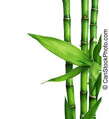 竹, 白, 隔離された