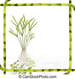 竹, 葉, 美しさ