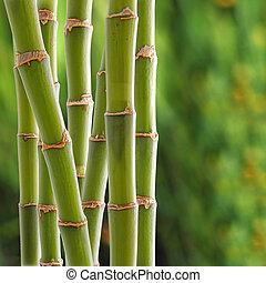 竹, backgroung
