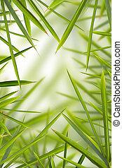 竹, shhot, backround