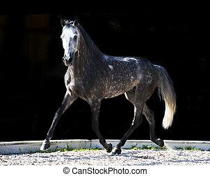 管理しなさい, 灰色, 馬, 動くこと