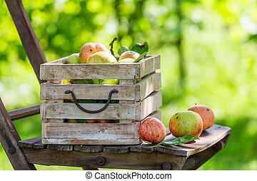 箱, 夏, 木製である, りんご, 新たに, 赤