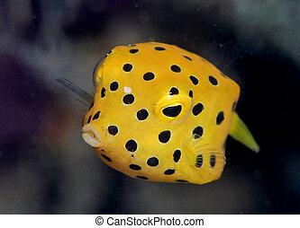 箱, fish, 黄色