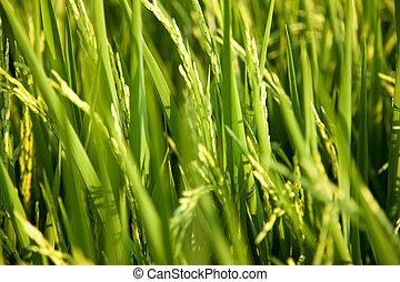 米, fields.