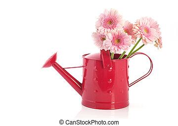 粉紅色, 噴壺, 由于, 花