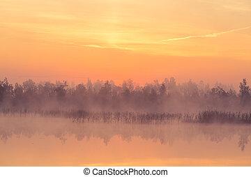 粉紅色, 有霧, 紫色, 太陽, 美麗, swamp., ower, 上升, 沼澤地, atmosphere., 日出
