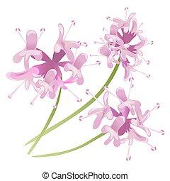 粉紅色, 白色, 花, 被隔离, 背景