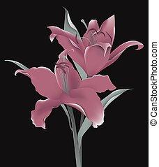 粉紅色, 離開, 黑色的背景, 花, 百合花