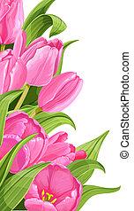 粉紅色, 鬱金香, 在懷特上, 背景