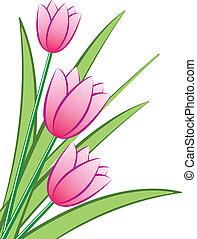 粉紅色, 鬱金香