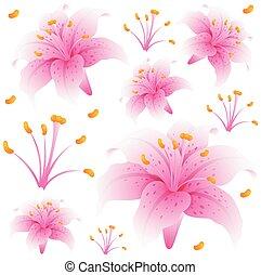 粉紅色, seamless, 設計, 背景, 花, 百合花