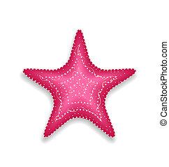 粉紅色, starfish, 被隔离, 在懷特上, 背景