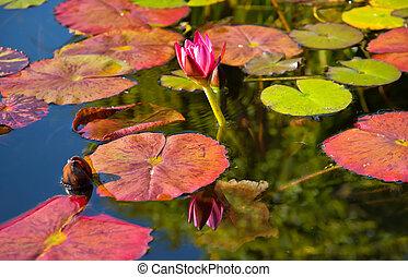 粉红色, 反映, capistrano, juan, 任务, 水, 加利福尼亚, san, 池塘, lilly, 花园