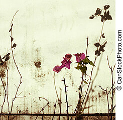 粉红色, 墙壁, bougainvillea, 漂白
