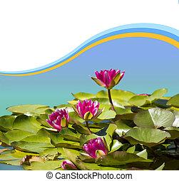 粉红色, 形象, waterlilies, 设计, 背景, 池塘, .flowers