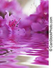 粉红色, 特写镜头, 浅, dof, flower., blossom., 集中, 雌蕊, 杜鹃花, stamens.