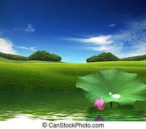 粉红色, 莲, 水反映