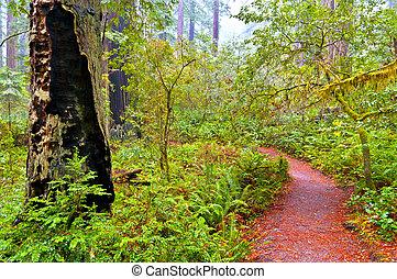 紅杉樹國家公園