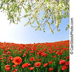 紅的罌粟, 領域