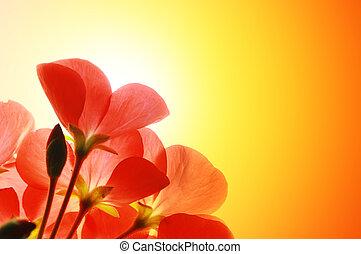 紅的花, 在上方, 陽光, 背景
