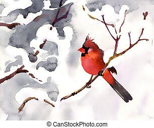 紅的鳥, 在一個分支上, 由于, 雪