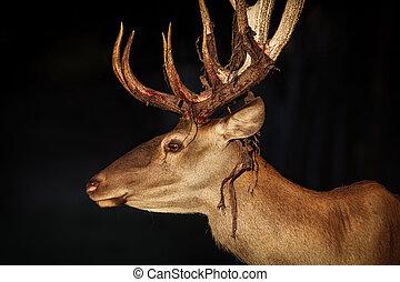紅的鹿, 特寫鏡頭