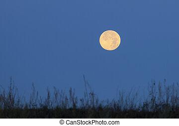 紅色, 月亮, 上, 藍色的天空