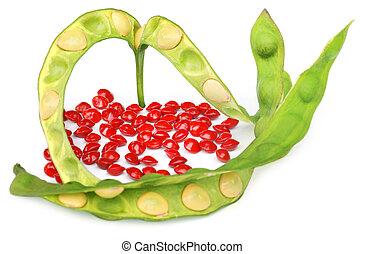 紅色, 種子, ......的, 檀香木