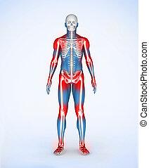 紅色, 關節, ......的, a, 藍色, 數字, skelet