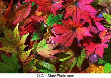 紅葉, カラフルである