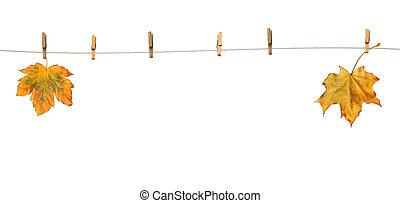 紅葉, 単語, かえで, clothespins