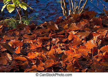 紅葉, 地面, ぬれた