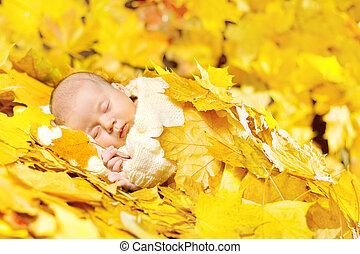 紅葉, 睡眠, 生まれたての赤ん坊, かえで