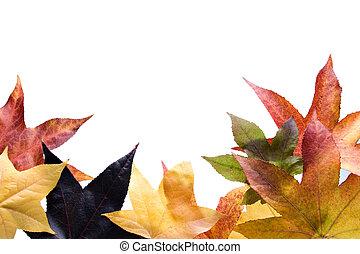 紅葉, 秋