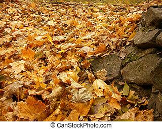 紅葉, 背景, 黄色