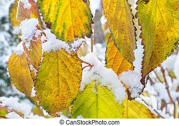 紅葉, colourfull, 凍りつくほどである
