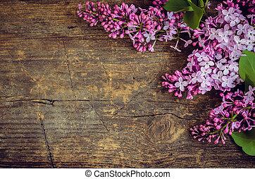 紫丁香, 水平, 背景
