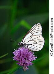 紫色の 花, ∥で∥, 蝶