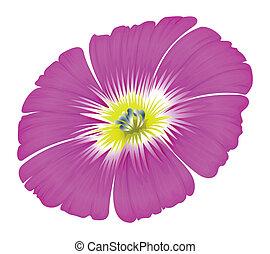 紫色の 花
