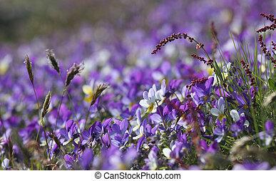 紫色の 花, ベッド