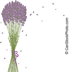 紫色の 花, ラベンダー, 背景