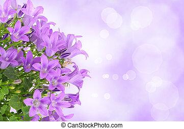 紫色的花, 背景