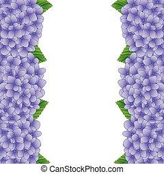 紫色, アジサイ, 花, ボーダー