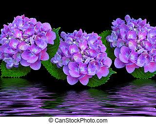 紫色, トリオ