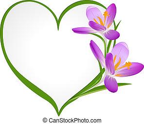 紫色, フレーム, heart., 形, クロッカス