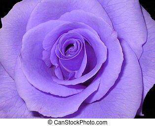紫色, 上升