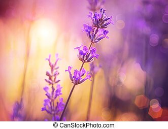 紫色, 摘要, 集中, 花, 植物, 軟, 設計