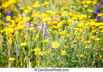 紫色, 野生の花, 牧草地, 黄色