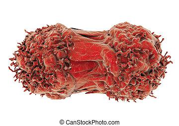 細胞, 劃分, 癌症