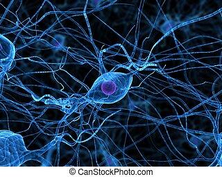 細胞, 神経
